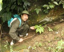 'Thâm nhập' vườn sâm cực quý trên dãy Hoàng Liên Sơn