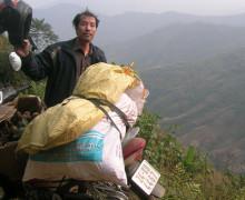 Người bỏ bệnh viện vào rừng tìm thần dược chữa dạ dày
