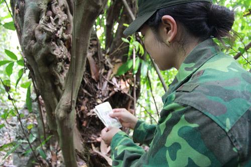 Khi khai thác một cây cổ thụ, chị Minh thường khấn vái xin thần linh, thổ địa