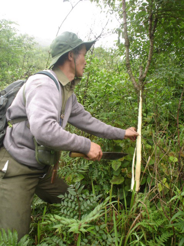 Ông Trần Ngọc Lâm phải tự vào rừng tìm thuốc quý