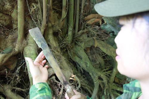Rễ lan co sai cứng đến nỗi mẻ cả lưỡi dao