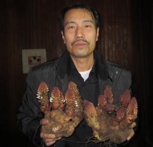 Lương y Phạm Văn Thanh và nấm ngọc cẩu