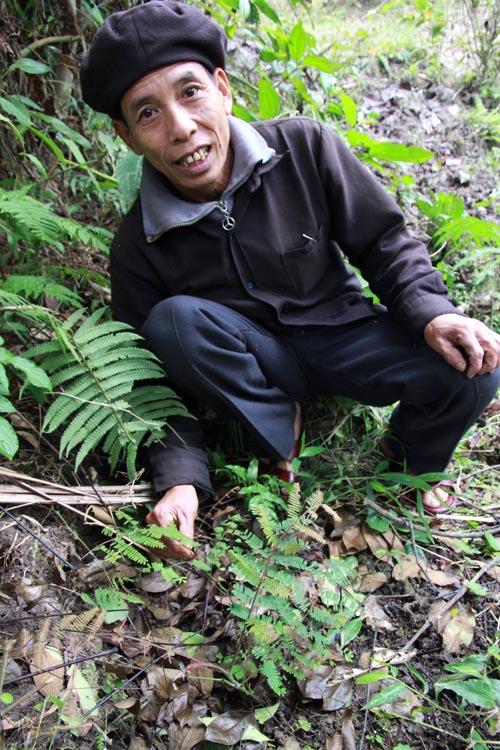 Ông Quang bên một loại thảo dược tốt cho gan