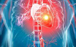 Triệu chứng các bệnh tim mạch thường gặp