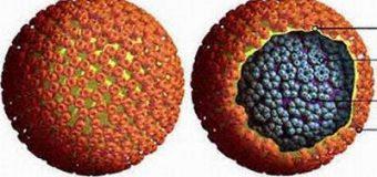 Sự thật về bệnh viêm gan B