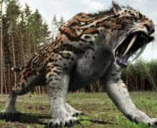 Hổ xám ăn thịt hàng chục người bên gốc gạo, khiến không ai dám bén mảng đến cây gạo khổng lồ có nhiều hồn ma