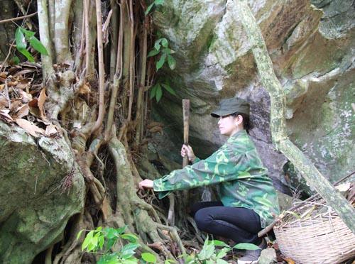 Chị Minh lấy rễ một loài cây quý làm thuốc