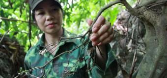 Kỳ lạ chuyện trị gout bằng… mảnh sành của lương y người Thái