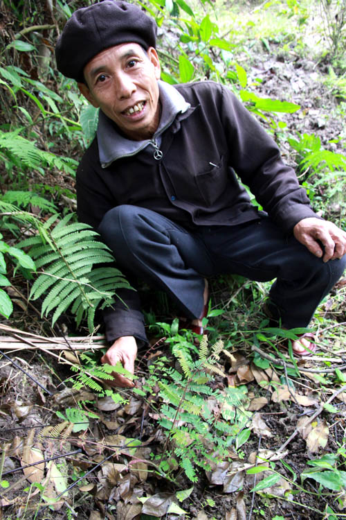 Ông Triệu Tài Ân bên cây thuốc Kiêu nhiêu lỵ mà ông di thực về vườn nhà