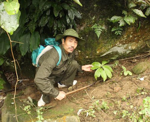 Lương y Thanh và cây thuốc quý có tên Thất diệp nhất chi hoa, do anh gieo trồng trong rừng