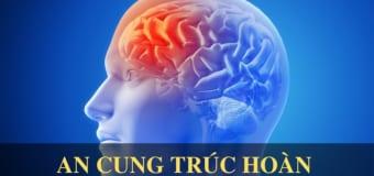 Chữa đột quỵ não bằng bài thuốc gia truyền An Cung Trúc Hoàn