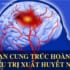 Bệnh xuất huyết não triệu chứng và những biến chứng nguy hiểm