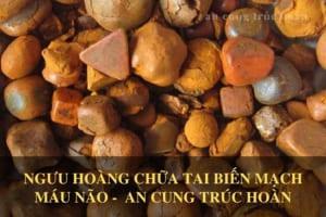 Tác dụng của ngưu hoàng trong An Cung Trúc Hoàn