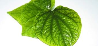 Điểm danh các loại cây chữa bệnh xương khớp hiệu quả nhất – Xương Khớp Việt Thanh