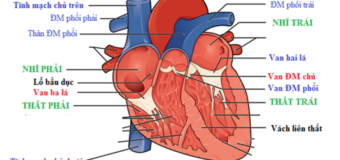 Bệnh tim và những biến chứng nguy hiểm